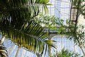 Edinburgh Botanic Garden Palm House interior.jpg