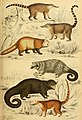 Edinburgh journal of natural history and of the physical sciences (1835) (21165524205).jpg