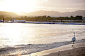 Egretta gularis schistacea on beach at Na'ama bay.jpg