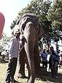 Elephant20171111 122119.jpg