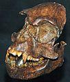 Epipliopithecus vindobonensis.jpg