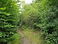 Epping Forest 20170727 112039 (49374728881).jpg