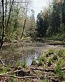 Erlenbruchwald oestl Holzweber.jpg