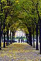Esplanade des Invalides, 30 November 2013.jpg