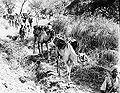 Ethiopian camel troops.jpg