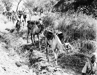 Ethiopian National Defense Force - Ethiopian troops transporting supplies by camel through vegetation during the East African Campaign.
