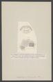 Euphrosyne laureata - - Print - Iconographia Zoologica - Special Collections University of Amsterdam - UBAINV0274 007 01 0004.tif