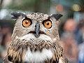 Eurasian eagle-owl (44055).jpg
