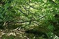 Exmoor, Bale Water - geograph.org.uk - 519982.jpg