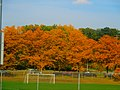 Fall in Madison - panoramio.jpg