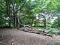 Fallen bough - geograph.org.uk - 1508428.jpg