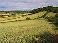 Farmland, Saunderton - geograph.org.uk - 892817.jpg