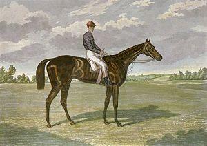 Favonius (horse) - Engraving of Favonius