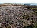 Featureless Moorland - geograph.org.uk - 414038.jpg