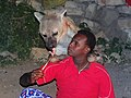 Feeding the Hyenas - Outside Walls of Old City (Jugal) - Harar - Ethiopia - 04 (8754052624).jpg