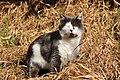 Felis silvestris catus - Bubikon 2011-02-04 15-38-42.JPG
