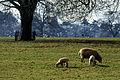 Field off Lutterworth Road, Burbage - geograph.org.uk - 126673.jpg