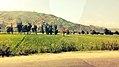 Fields of Swat.jpg