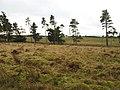 Fir Park - geograph.org.uk - 624763.jpg