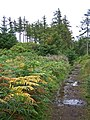 First signs of autumn - geograph.org.uk - 1454876.jpg