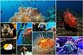 Fish-collage-1502404.jpg
