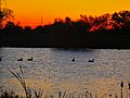 Five Canada Geese in the Lagoon - panoramio.jpg