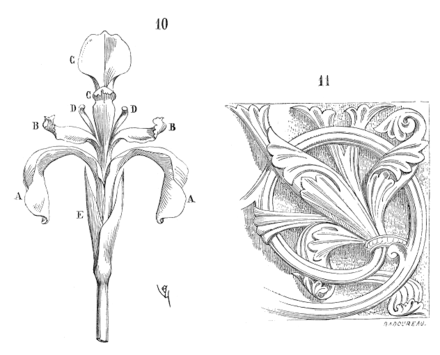 Iris compared with fleur-de-lis ornament in French Fleur.iris.2.png