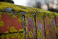 Flickr - Laenulfean - mossy wall 2, unrotated.jpg