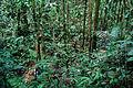 Flickr - ggallice - Jungle stream (1).jpg