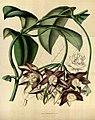 Flore des serres et des jardins de l'Europe (8588342511).jpg