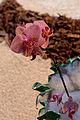 Florissimo 2015 048.jpg