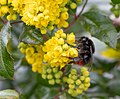 Flower EM1B9398 (49818221982).jpg