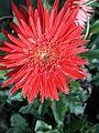 Flower Nalco Park 10.jpg