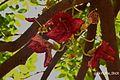 Flower red.jpg