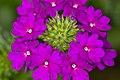 Flowers (149767949).jpeg