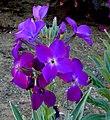 Flowers (5709571495).jpg