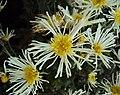 Flowers - Uncategorised Garden plants 209.JPG