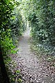 Footpath from Russell Drive to Pickersleigh Avenue - geograph.org.uk - 1459758.jpg