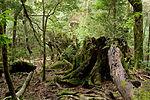 Forest in Yakushima 36.jpg
