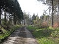 Forest track in Kyloe Wood - geograph.org.uk - 1263653.jpg