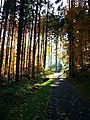Forest walks in autumn - panoramio.jpg