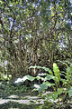 Forrest, Barbados (7031289591).jpg