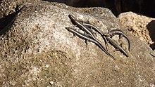 Fort Dauphin rocks 11.jpg