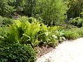 Fougères du sentier botanique du Clos Lucé.JPG