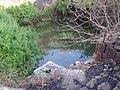 Freshwater ponds inside Suvarnadurg fort - panoramio.jpg