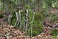Góry Stołowe, korzenie na kamieniu.jpg