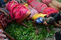 Gajan Sannyasi Rolling over Leaves - Bainan - Howrah 2015-04-14 8062.JPG