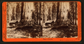 Galen's Hospice, Mariposa Grove, Mariposa County, Cal, by Watkins, Carleton E., 1829-1916 3.png