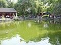 Garden at GongWangFu (2917148338).jpg