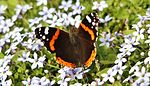 Garden colours IMG 0209 (14443226545).jpg